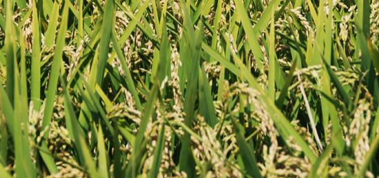 Преработка и превоз на зърно