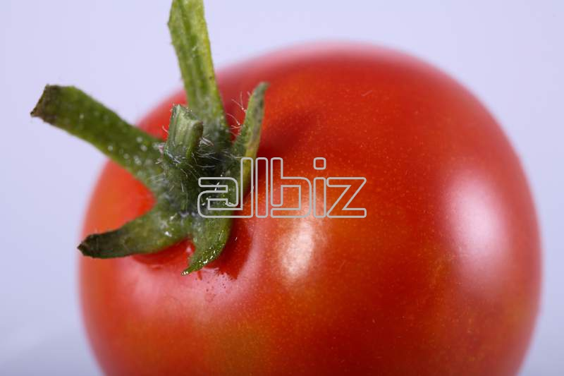 Купувам Търговия с домати