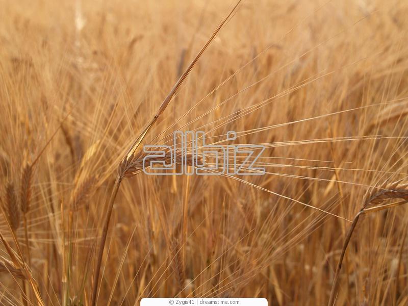 Купувам Производство на зърнени култури