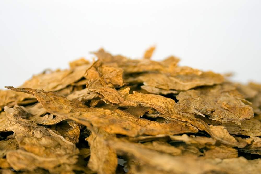 Купувам Тютюн едролистен тип Virginia / Tobacco Type Virginia on leaves
