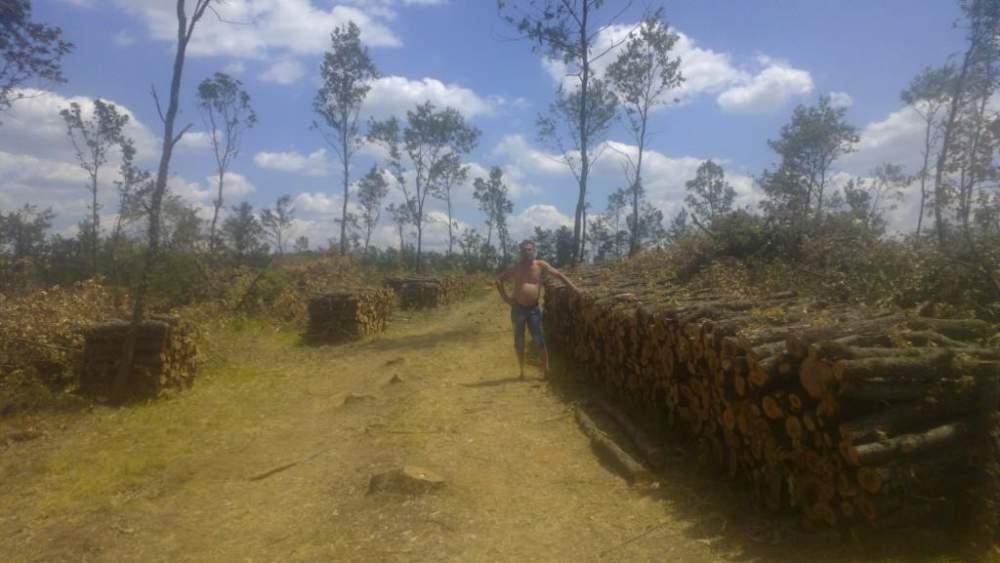 Купувам Firewood