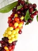 Buy Sweet Cherries Regina - fruits are large, red-brown