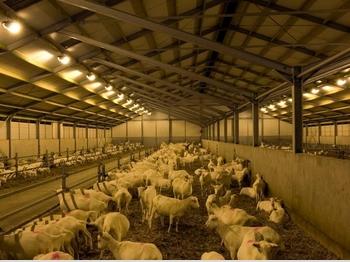 Купувам Програми за млечни кози