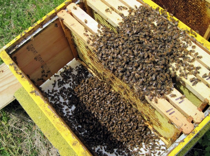 Купувам Оборудване за пчеларство