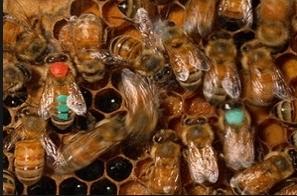 Купувам Пчеларски инвентар