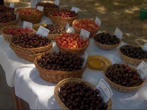 Купувам Череши, едри - български сортове