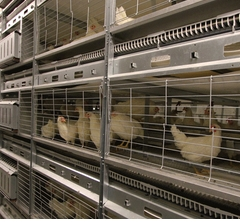 Buy Cage equipment for poultry farming