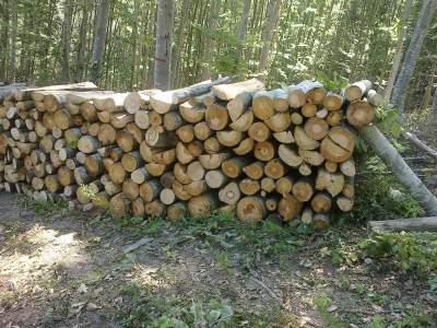 Купувам Дърва за огрев от бук