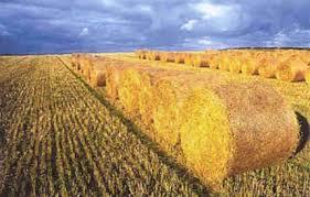 Купувам Производство на брикети и пелети от растителна био маса