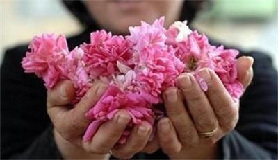 Розово абсолю