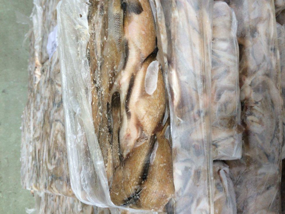 Купувам Замразена Морска кая 13+ цена 1,10 €/ кг