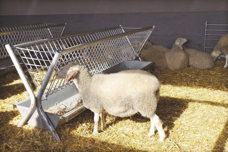 Купувам Двустранна хранилка за овце и кози