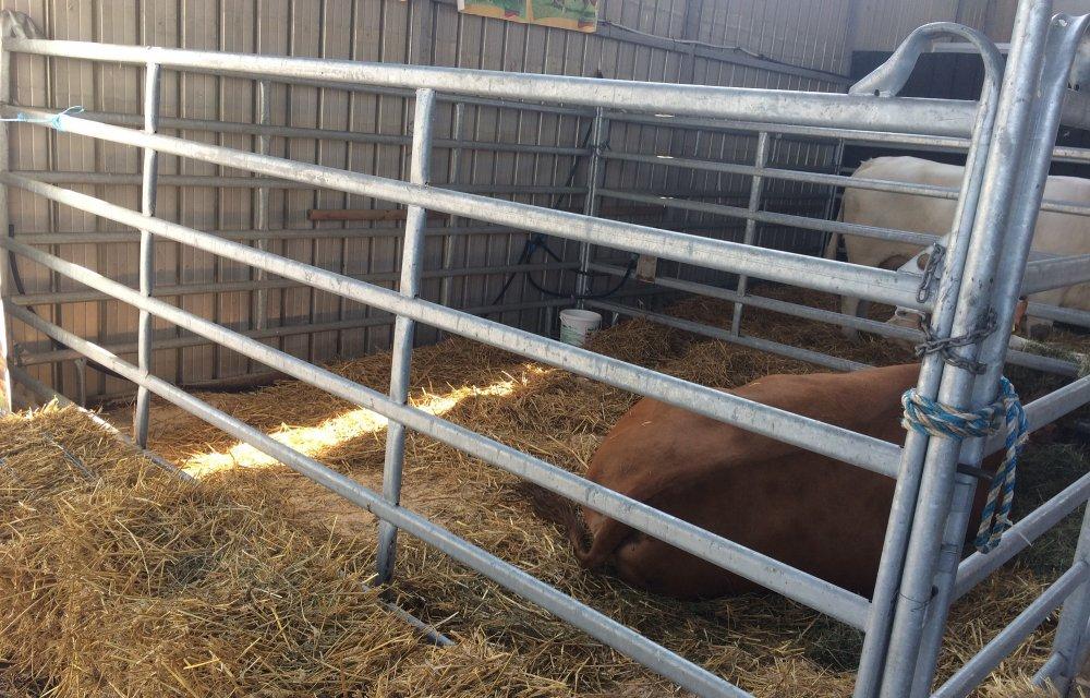 Купувам Прегради за коне и крави