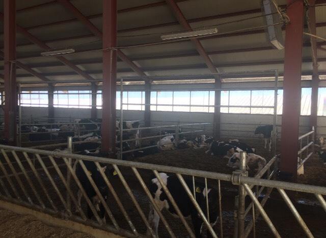 Купувам Хранителни решетки за крави - 4М