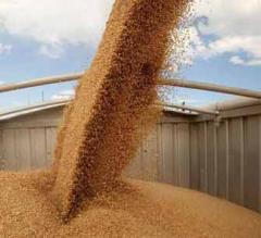 Зърнопроизводство