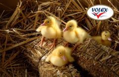 Патешки яйца