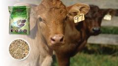 Фураж за крави с 15% протеин