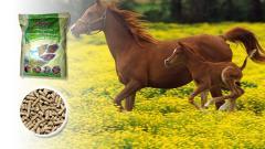 Пълноценен комбиниран фураж за коне в тренинг