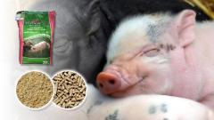 Допълваща белтъчно биоконцентратна смеска за свине