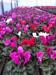 Течен биотор за цветя