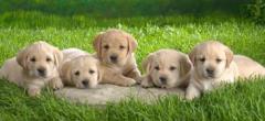 Фураж за хранене на кучета