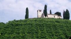 Вино Mionetto