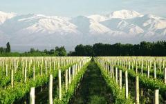 Вино Finca La Celia