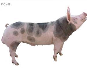 Оборудване за животновъдство, генетика, IC 408