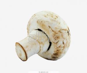 Прясна култивирана печурка