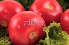 Търговия с домати