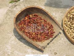 Производство и търговия със сушен червен пипер