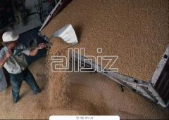 Производство на зърно