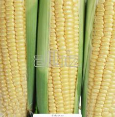 Фирмата е дългогодишен земеделски производител и търговец на зърнени култури. Разполага с богат асортимент от собствено производство в складовата база в село Байово (бивш стопански двор).