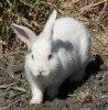 Комбинирани фуражи за зайци
