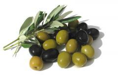 Внос на маслини
