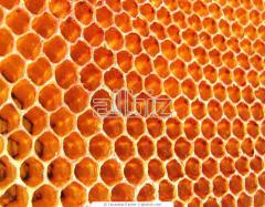 Пчелен прашец
