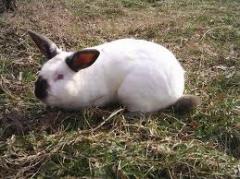 Пълноценен комбиниран фураж за зайци - Стартер