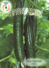 Зеленчукови семена Лонг F1