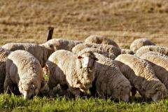 Организиране на доставка на животни от съвременен