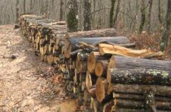 Дървен материал от бук
