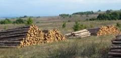 Дърводобив