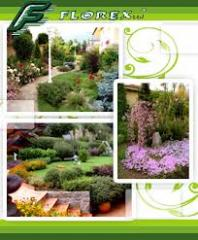 Ornamental plants for landscaping