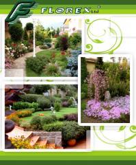 Garden perennial flowers