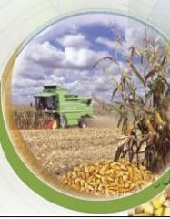 Зимна пшеница Панония