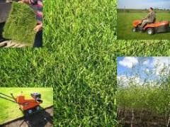 Тревен чим за трайно озеленяване