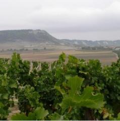 ТЕРОАР, бели вина
