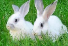 Фураж за зайци