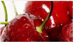 Cherries - young plants of selected varieties.
