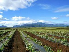 Stimulators of plant growth (humates)
