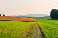 Peat from lowland, fertilizer